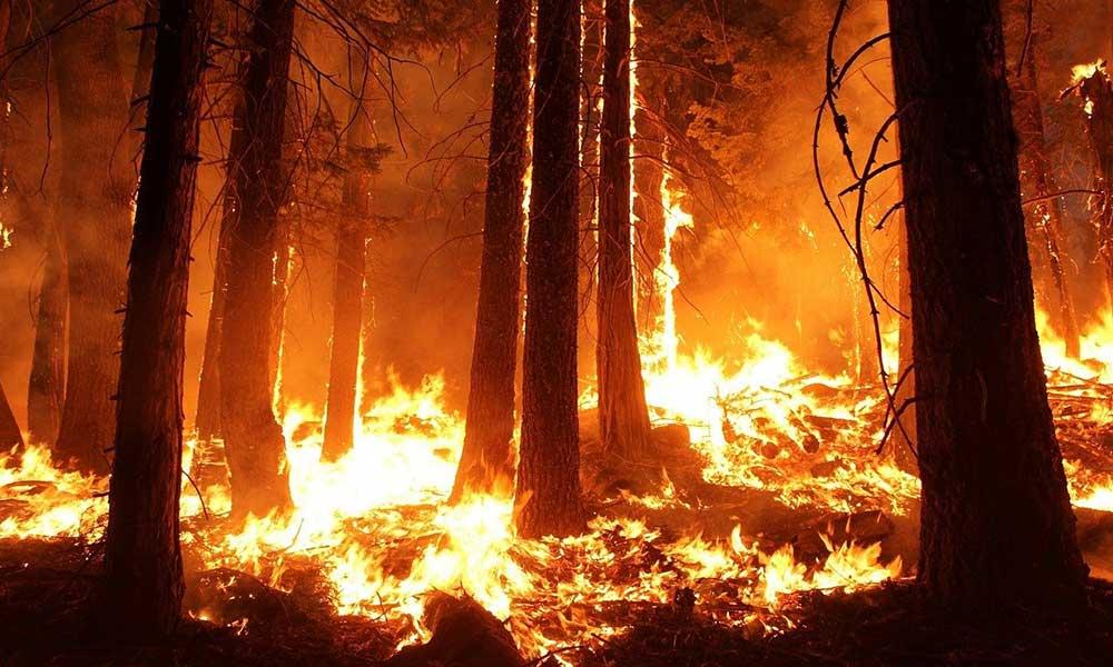 Uzmanlardan 'orman yangını' açıklaması: Önlem alınmalı