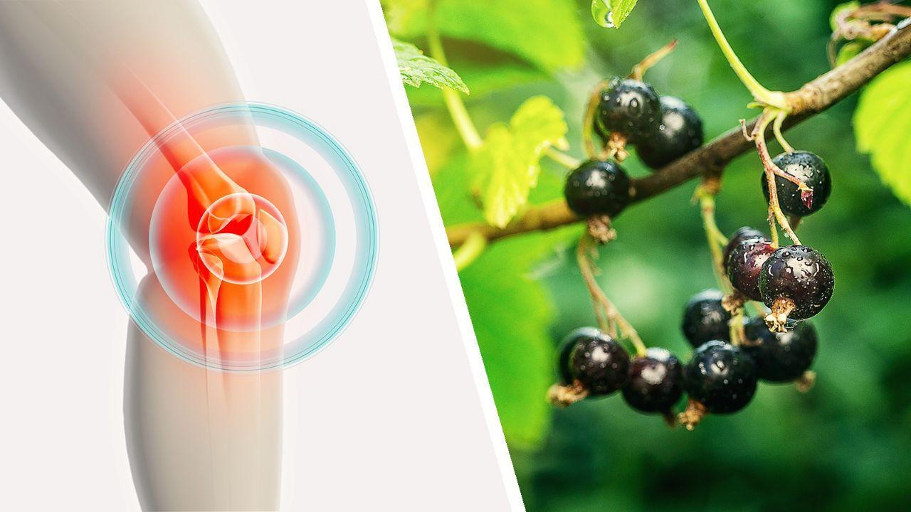 Biomet Ar-Ge Grubu'ndan eklem rahatsızlıklarına bitkisel çözüm