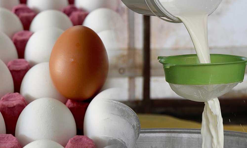 Yumurta üretimi düştü… Süt üretimi arttı