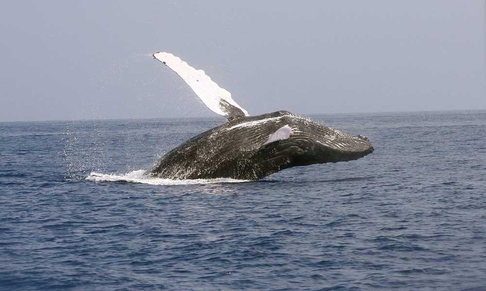 90'ı öldü 135'i kurtarılmayı bekliyor… Balinalar için süre kısaldı