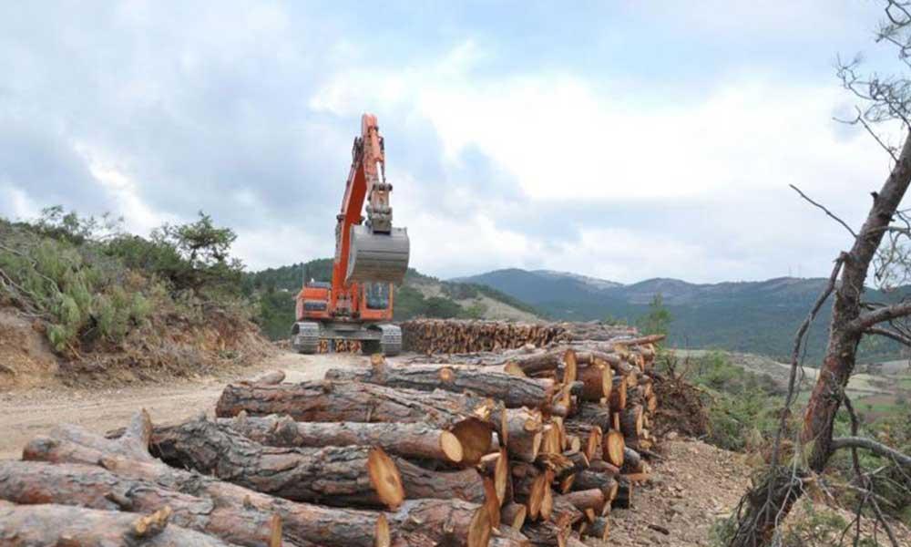 'Eskişehir'de, 400 bin ağaç kesilecek, farkında mısınız?'