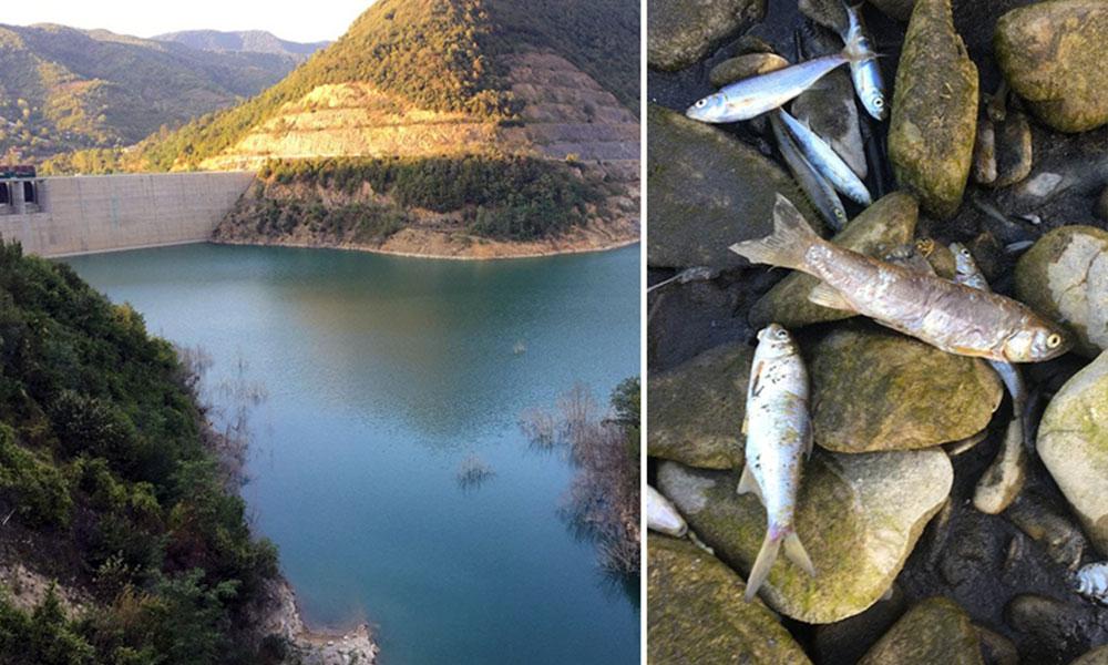 Bartın'da baraj kurudu, binlerce balık telef oldu