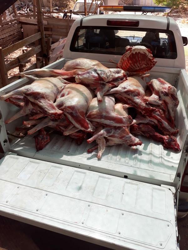 Buca'da kaçak et operasyonu: 20 küçükbaşa el konuldu