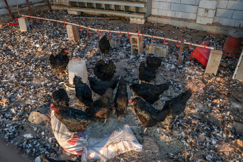 Antalya'da vahşet! Açlık ve susuzluktan ölen hayvanları çuvala koyup ormana attılar