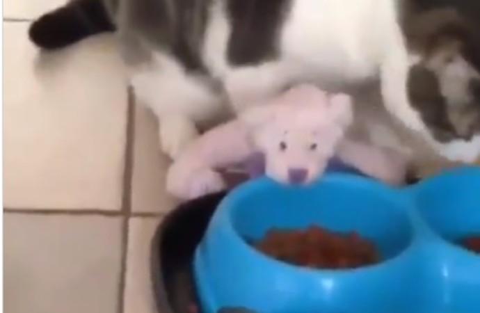 Oyuncağı da yesin diye mama kabının yanına getiren kedi ilgi odağı oldu