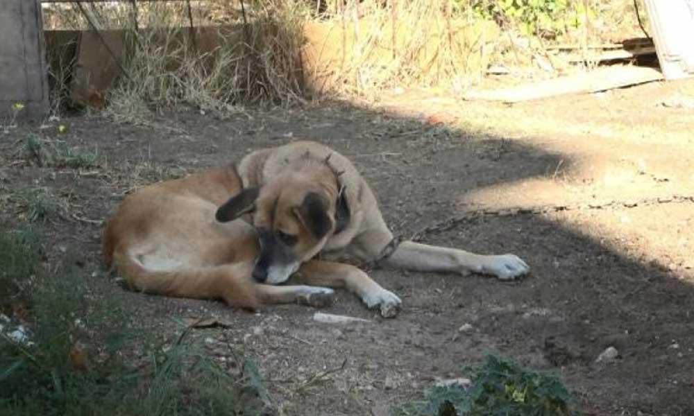 Üç köpeği bıçaklayarak birini öldürdü: Adli kontrol şartıyla serbest bırakıldı