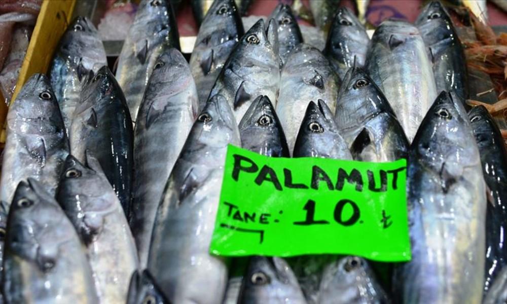 Balıkçıların gözdesi palamut mezatta 10 liradan alıcı buldu