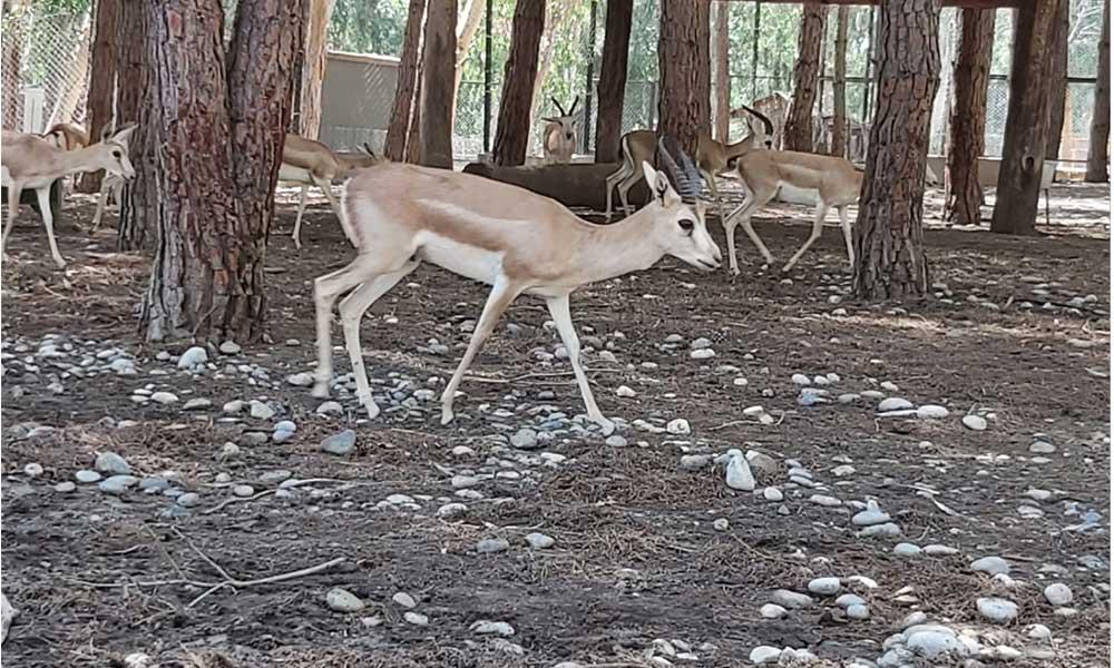 Mersin'den İzmir'e beş yaban hayvanı gönderildi