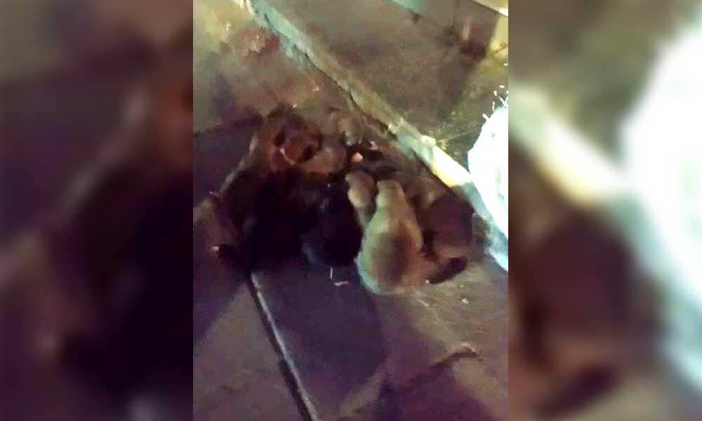 Vicdansızlığın bu kadarı! Yavru köpekleri çuvala koyup sokağa attılar