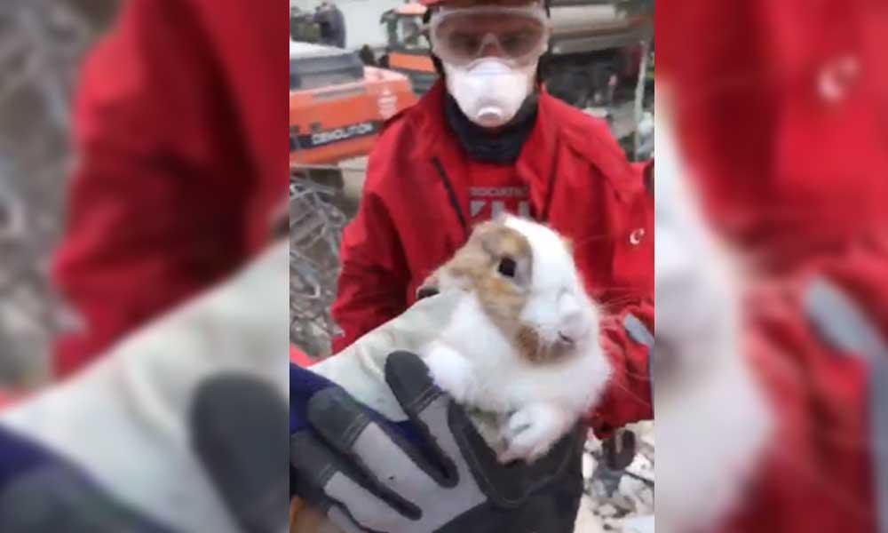 AKUT, enkaz altında kalan tavşanı kurtardı