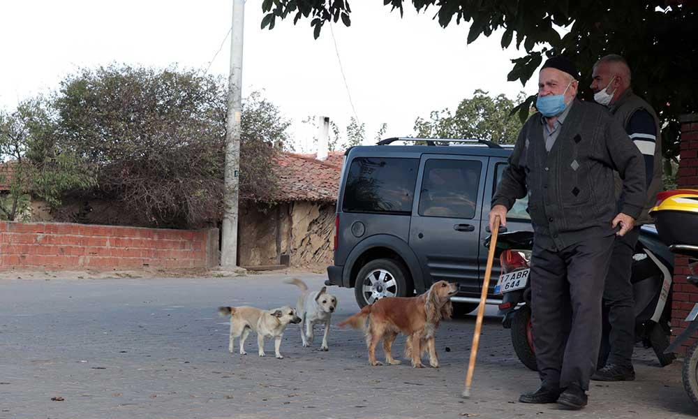 Köpekleri zehirleyerek öldürmüşlerdi: Her köpek için bin 902 TL ödeyecekler
