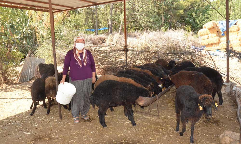 Mersin Büyükşehir'den küçükbaş hayvan alan üreticilerle mutlu