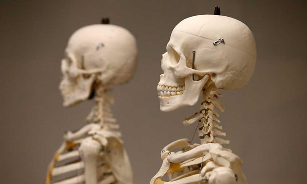 Bilim insanları duyurdu: Yeni bir organ keşfettik