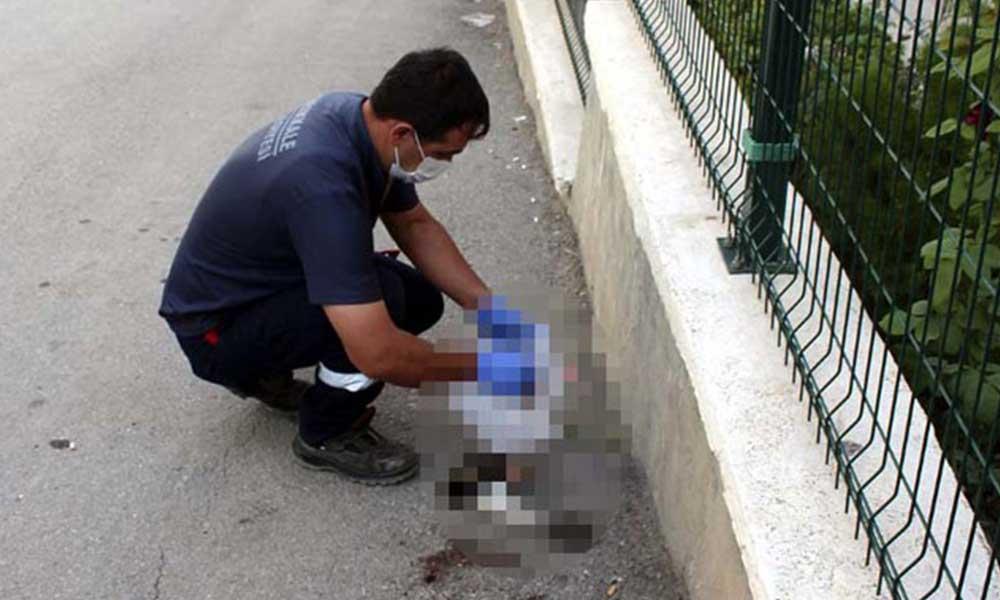 Kırıkkale'de hayvan vahşeti! Yavru kedi kafası ve ön ayakları kopmuş halde bulundu