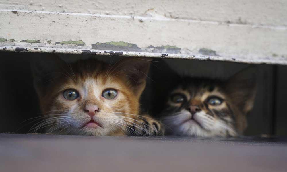 Gaziantep'te hayvan katliamı: Çok sayıda kediyi zehirlediler