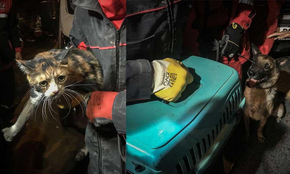 Enkazdaki kediyi arama kurtarma köpeği kurtardı