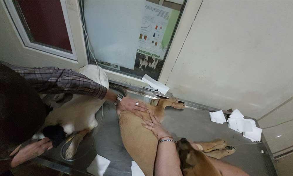 Çanakkale'de zehirlenen köpeklerle ilgili yeni gelişme