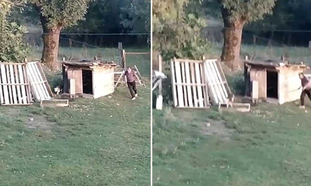 Komşusunun köpeğini sopayla dövdü: Çocuklar gözyaşları içinde izledi