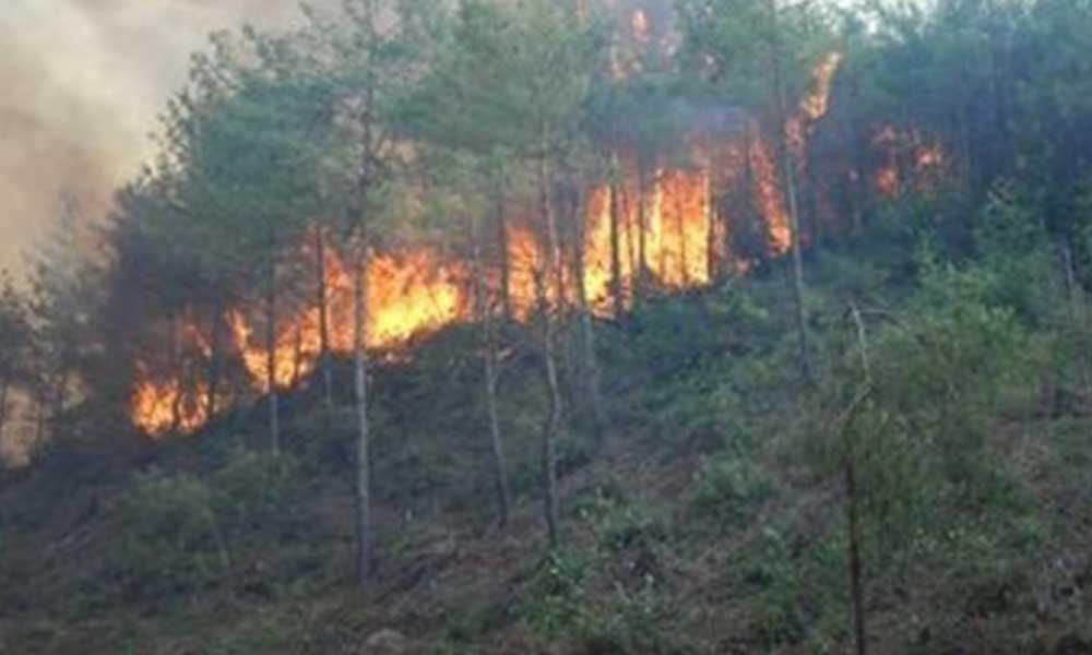 Osmaniye'de ormanlık alanda yangın; alevler evlere de sıçradı