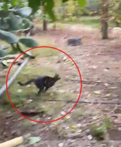 İtfaiye ekipleri, su kuyusuna düşen yavru kediyi kurtardı
