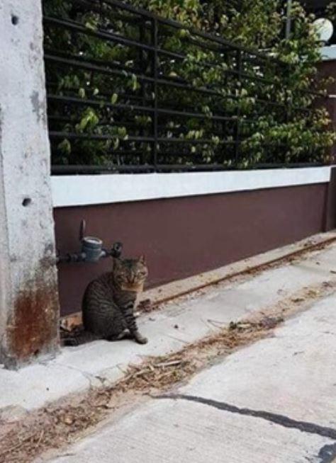 Evden kaçan kedi, 'borçlu' olarak döndü