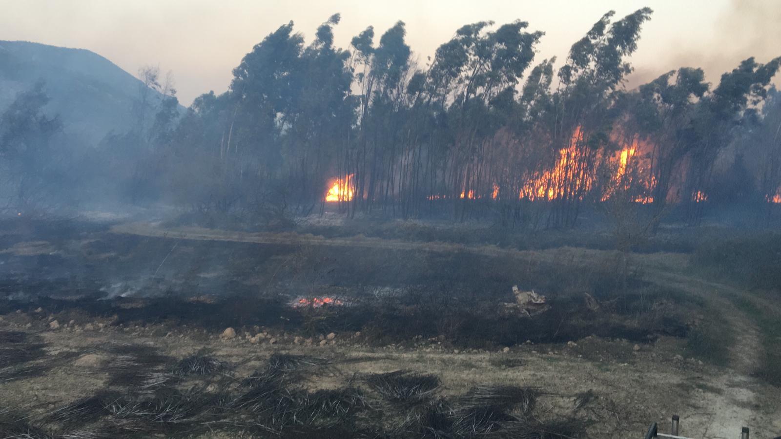 Muğla'da yangın: 12 dönümlük alan zarar gördü