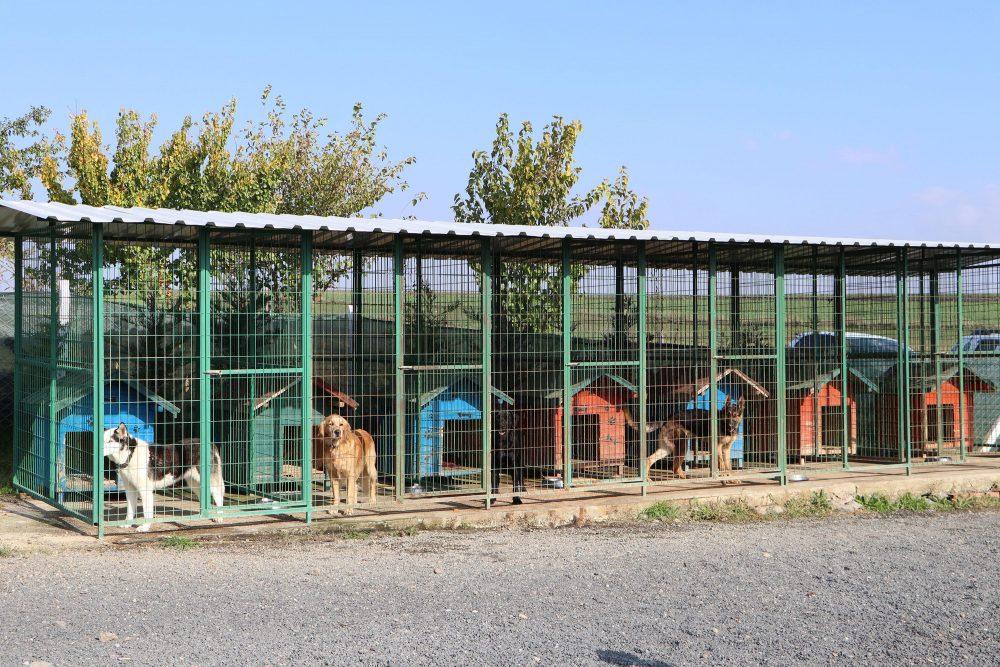 Köye yerleşerek 'köpek oteli' kurdular
