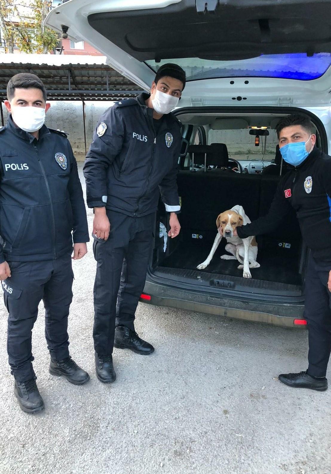 Sokak köpeğine sopayla saldırmıştı, gözaltına alındı