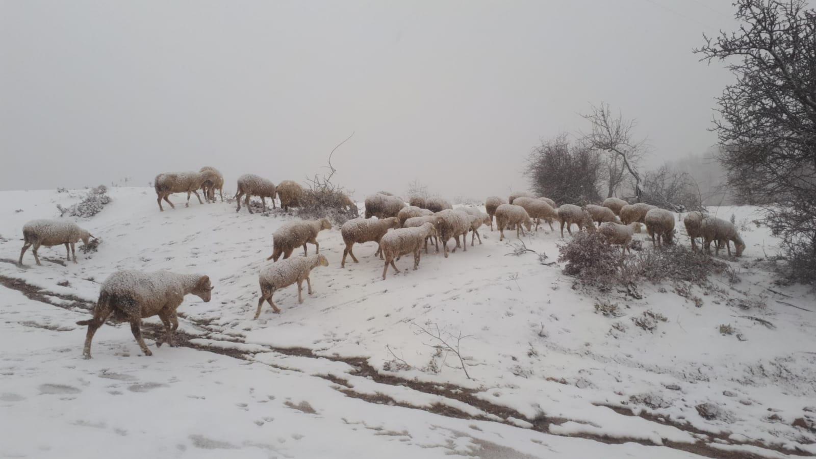 Yılın ilk karı yağdı, Dede Kavak Yaylası beyaza büründü