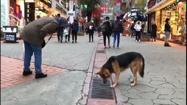 Mazgala bakan sokak köpeğinin sırrı