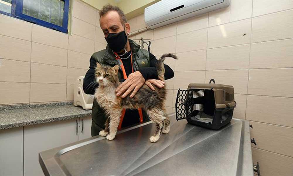 Enkazdan çıkarılan kediyi Haluk Levent sahiplendi
