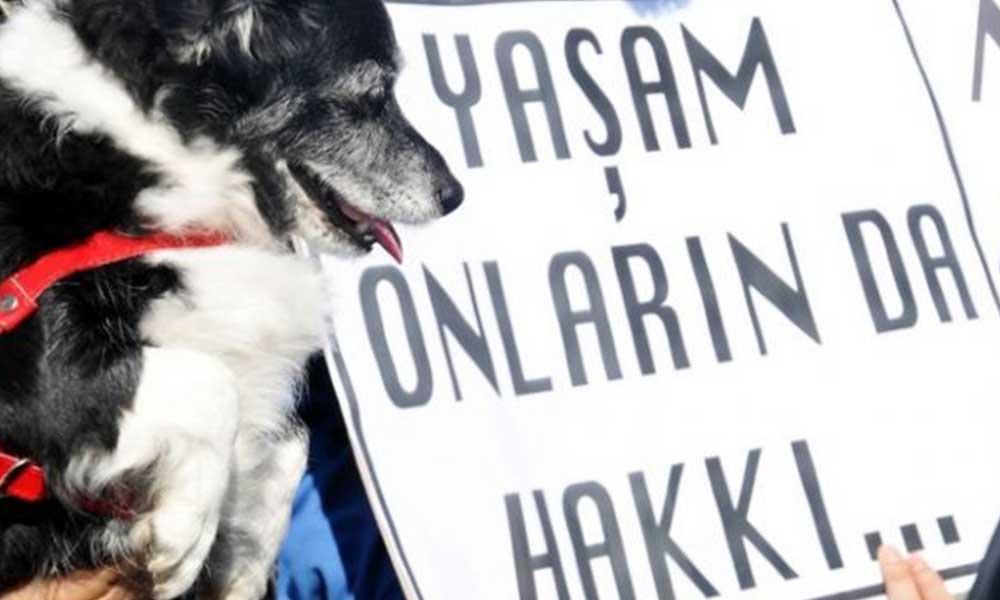4 köpeği zehirleyerek öldüren şahıs gözaltına alındı
