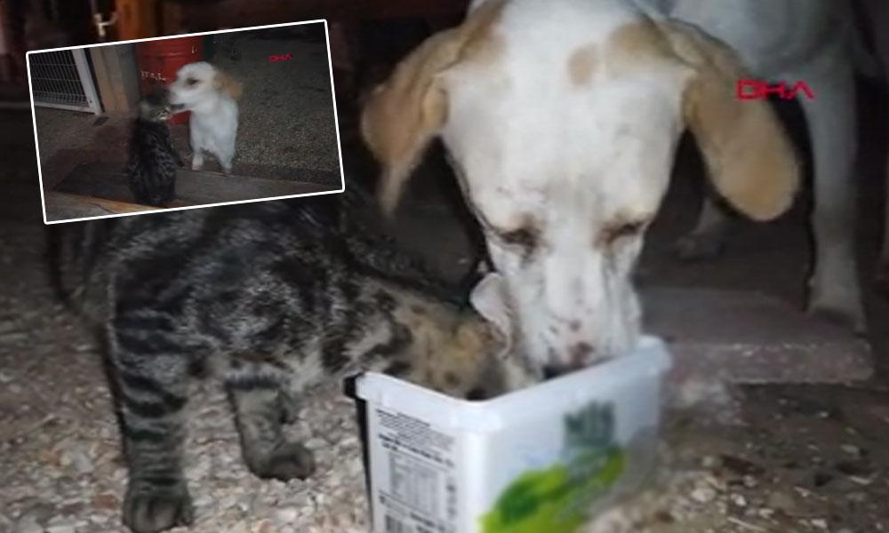 Kedi ile köpeğin dostluğu beğeni topladı