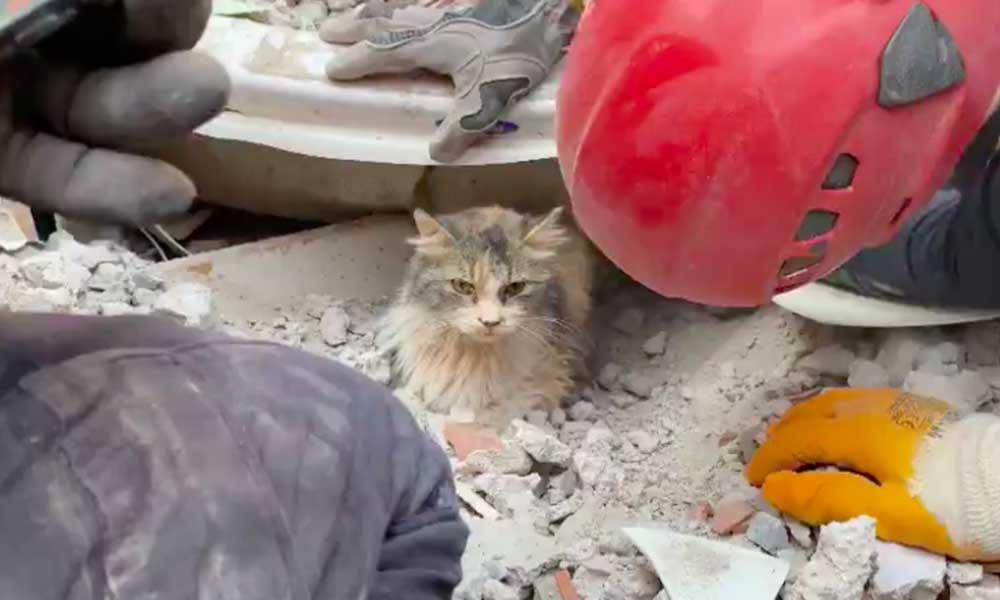 Rıza Bey Apartmanı'ndan 4 yavru kedi kurtarıldı