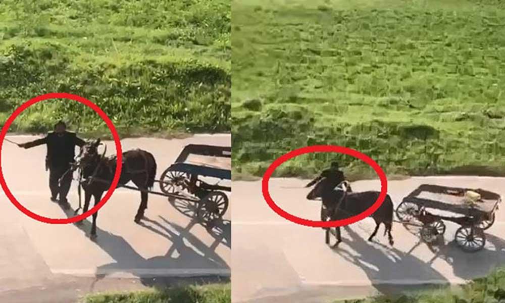 Bursa'da vahşet! Yorulduğu için yola devam edemeyen atı kırbaçla dövdü