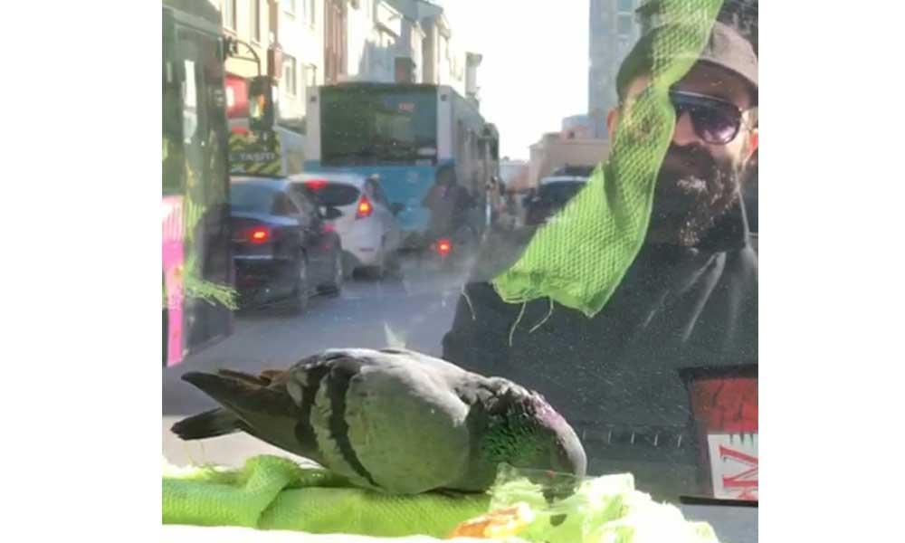 Trafiği durdurarak yaralı güvercini kurtardı