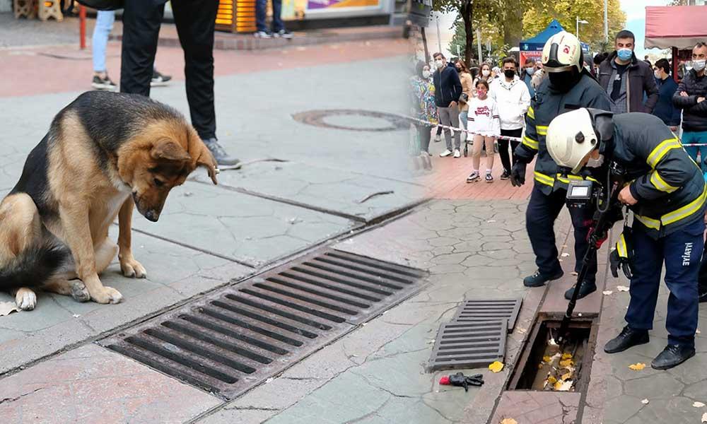 Günlerdir mazgallara bakan köpeğin derdini itfaiye ekipleri çözdü
