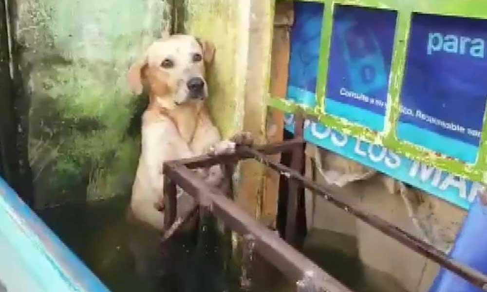 Selden kurtarılan köpeğin görüntüleri sosyal medyada gündem oldu