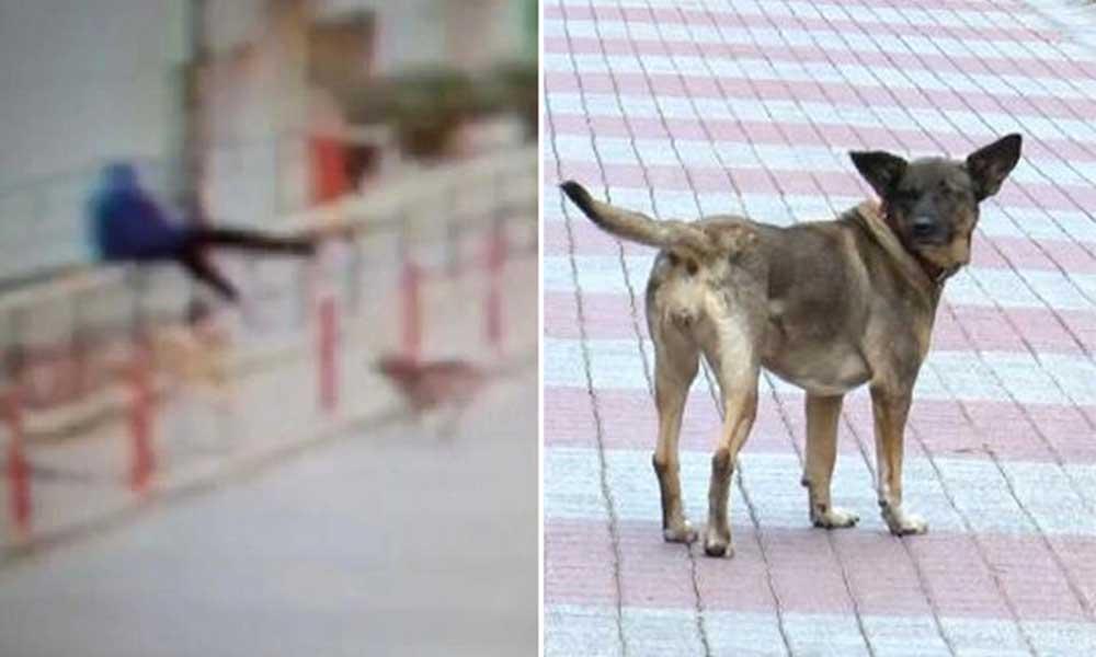 Köpekten kaçarken 6 metre yükseklikten düştü