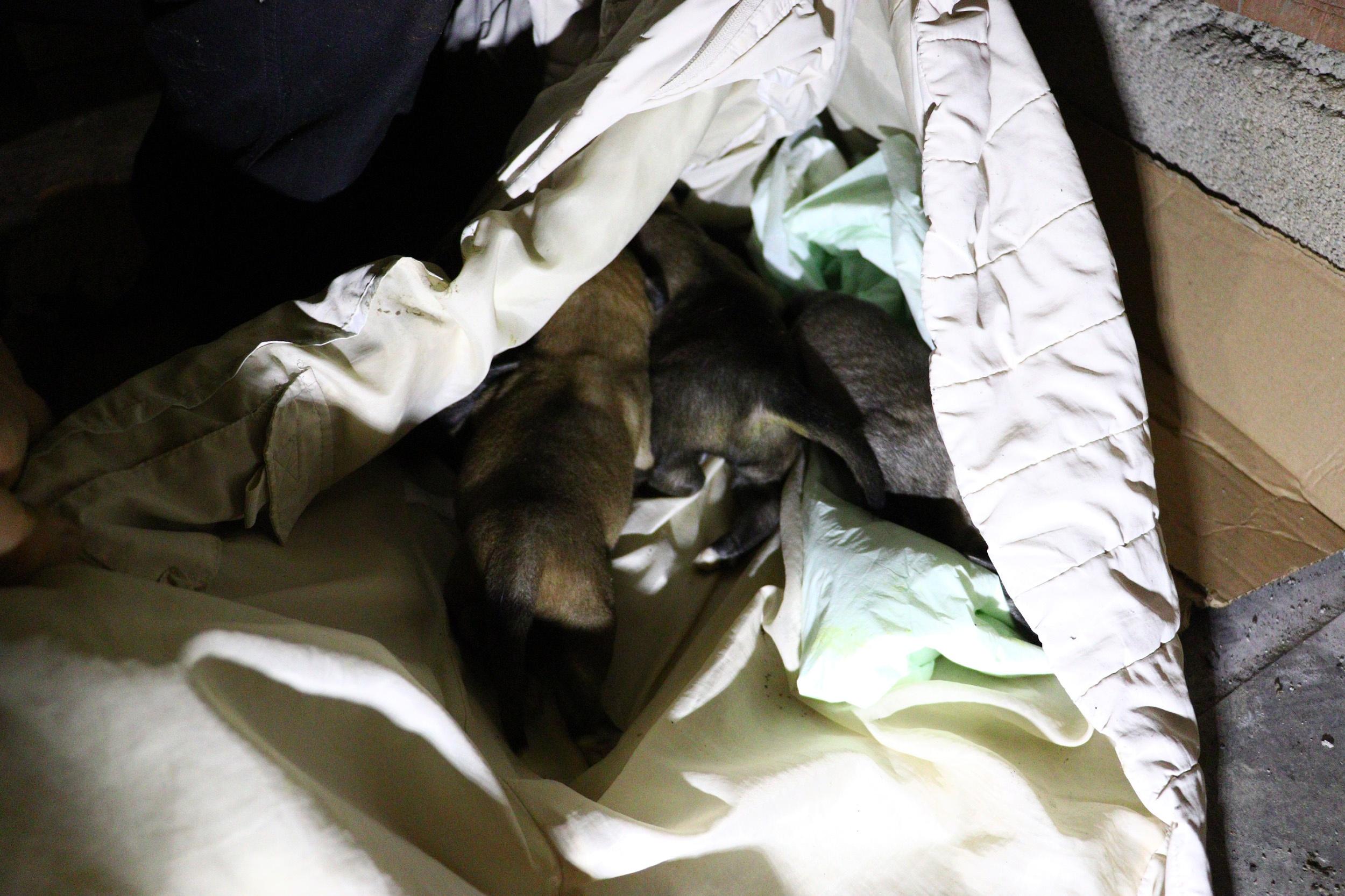 6 sokak köpeği zehirlenerek öldürüldü: Yasa için neyi bekliyorlar?