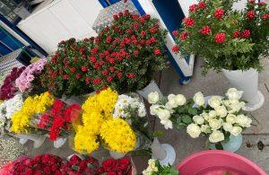Yılbaşı çiçeği 'kokina'ya yoğun talep