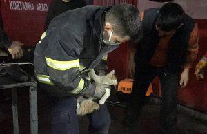 Aracın camına not bırakıp kedinin kurtarılmasını sağladılar