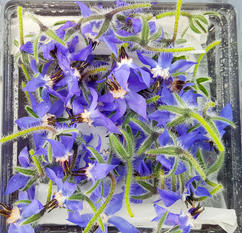 Yenilebilir çiçekler hem damağa hem göze hitap ediyor