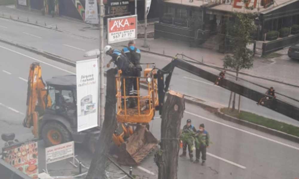 AKP'li belediye İBB'yi kötülemek için ağaç kesti iddiası