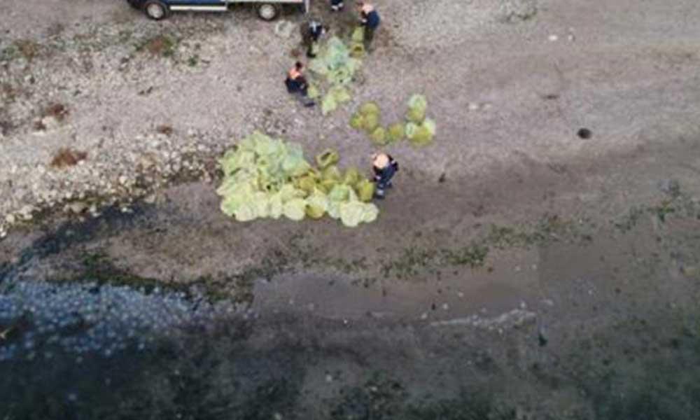 İBB deniz anaları için alarma geçti… Tonlarca toplandı