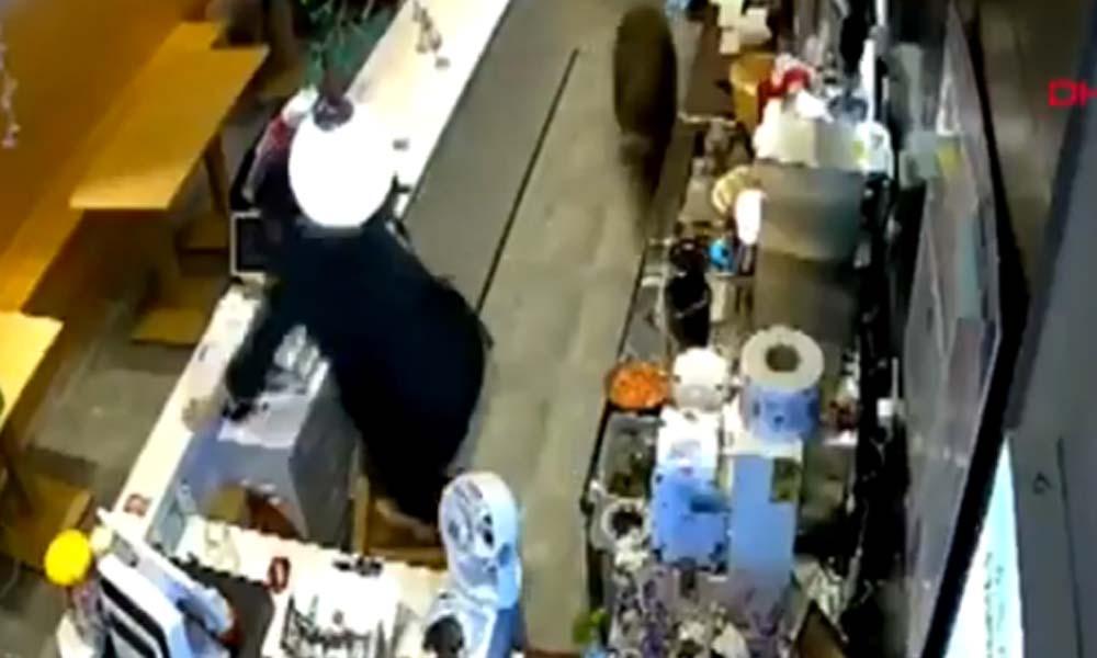 Aç kalan domuz kafeye girdi… Kasiyerin panik anları güvenlik kamerasına yansıdı