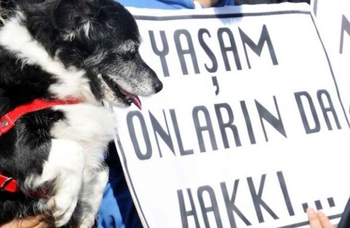 Yasa daha neyi bekliyor? 9 yavru köpek yakılarak katledildi