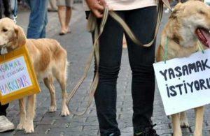 Ses telleri kesilen 39 köpeğin sahibine para cezası!