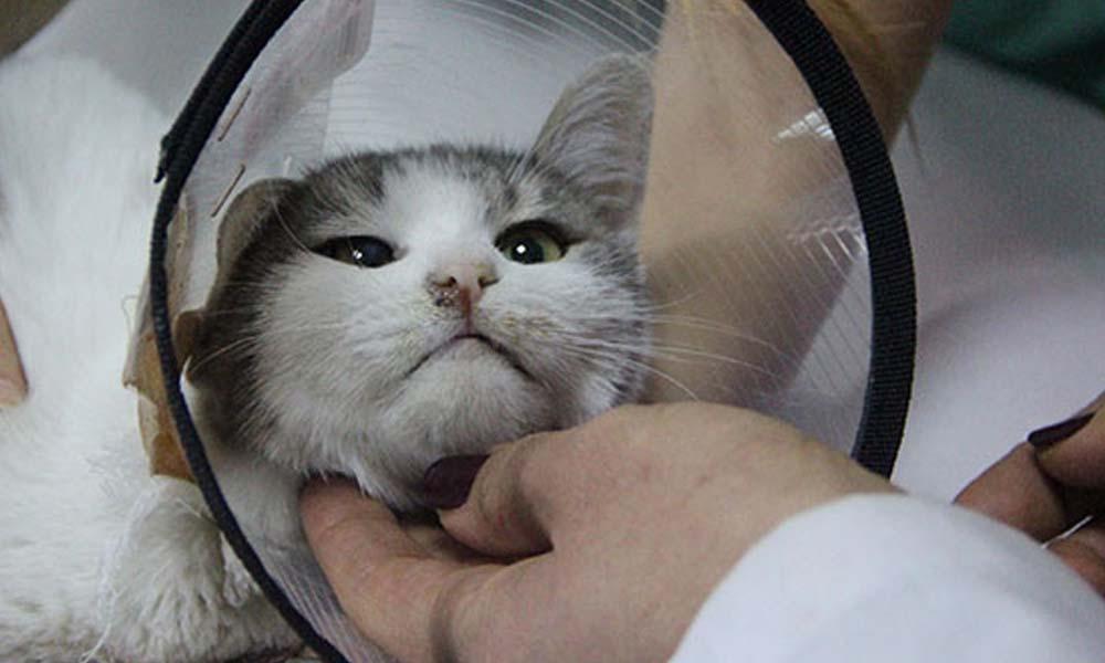 Patileri kesilen kedinin ölümünde 'büyü' iddiası