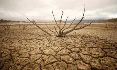 Trakya'da kuraklık krizi: Yüzde 30 – 50 arası kaybımız var!